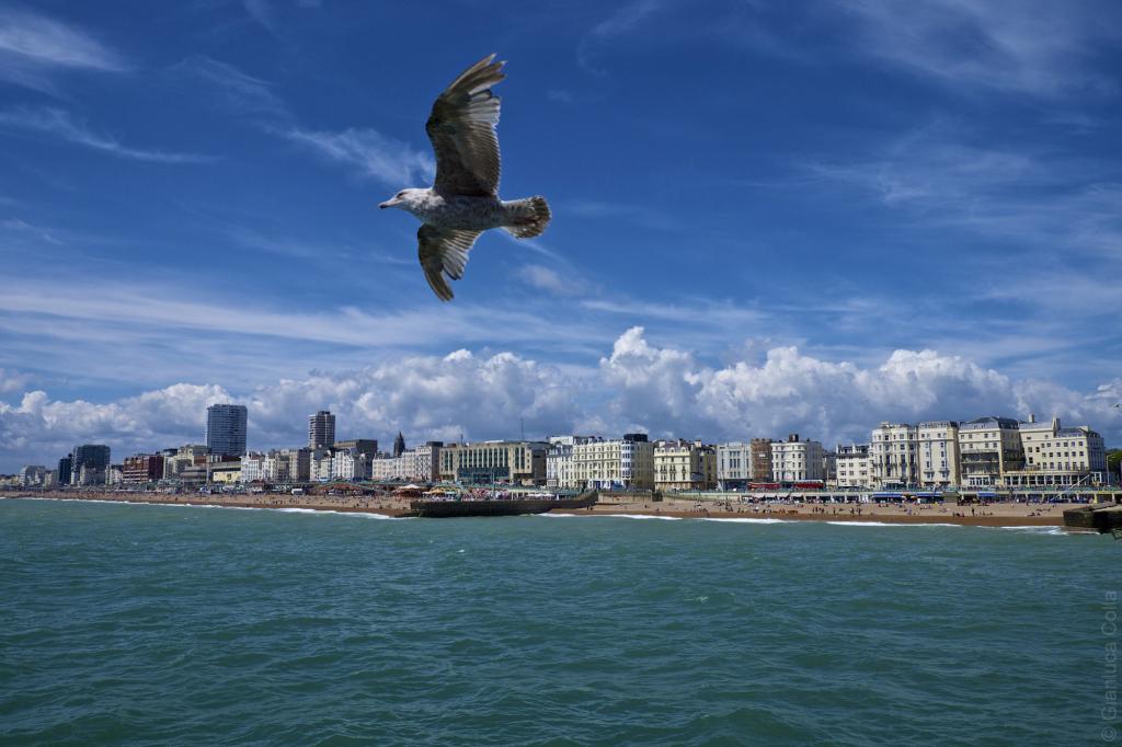 A bird flies over Brighton's pier.